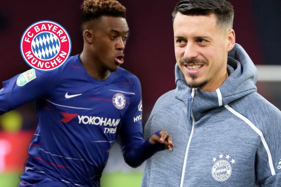 FC Bayern vor Transferende: Wagners Fehlen und der Wirbel um Hudson-Odoi