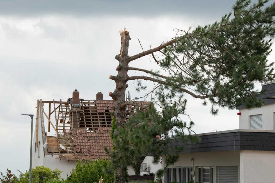 Ein zerstörter Baum steht vor einem Haus dessen Ziegel durch den Sturm abgedeckt wurden.