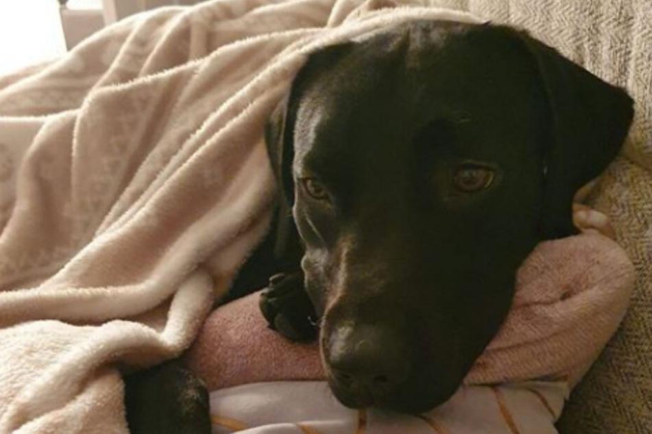 Hund Luther darf sich in Zukunft über eine der luxuriösesten Hundehütten Englands freuen.
