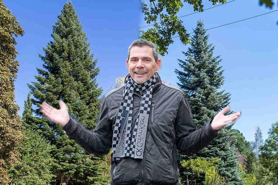 Weihnachtsmarkt-Chef Matthias Rose (55) zeigt die Finale-Bäume. Einer davon  wird der neue Zwickauer Weihnachtsbaum.
