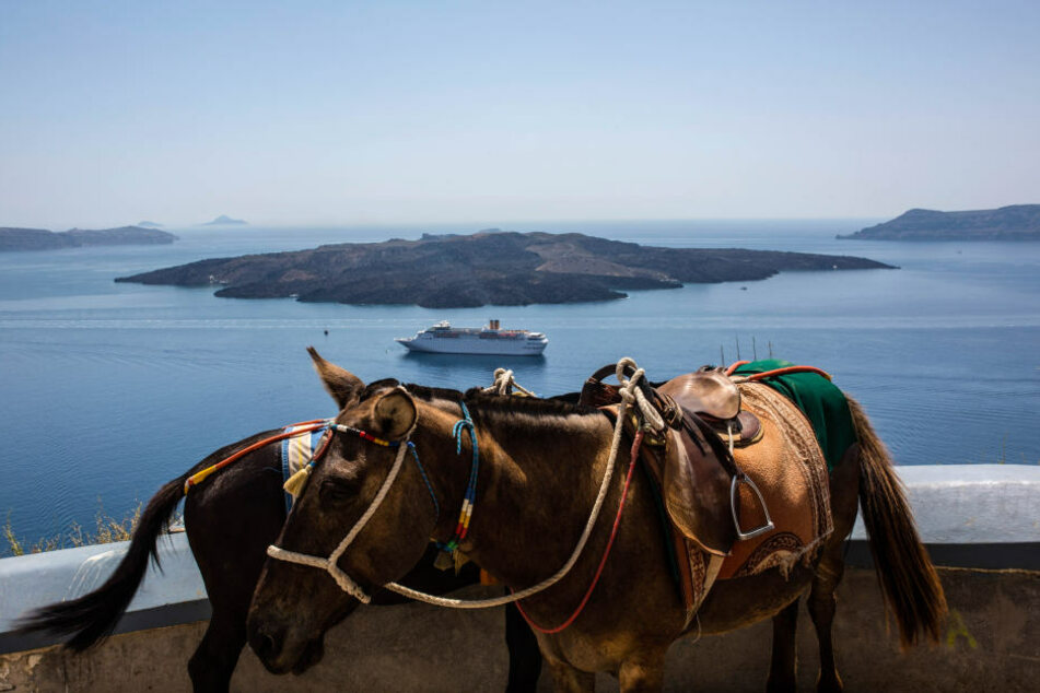 In Thira, auf der Insel Santorin, macht die Hitze den Tieren schwer zu schaffen. Oft erhalten sie nicht mal Wasser.