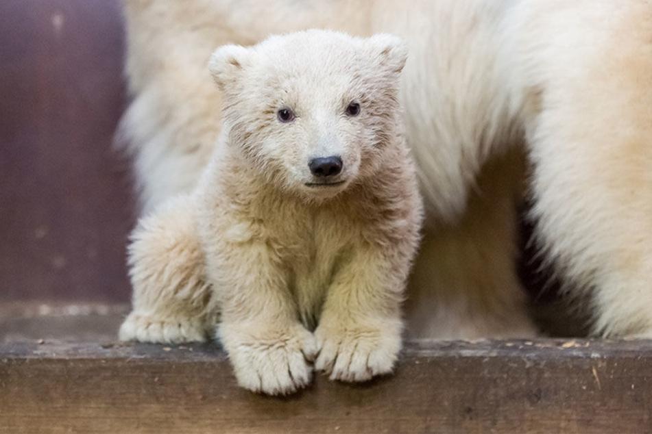 Fritz war der erste Nachwuchs im Tierpark seit 22 Jahren.