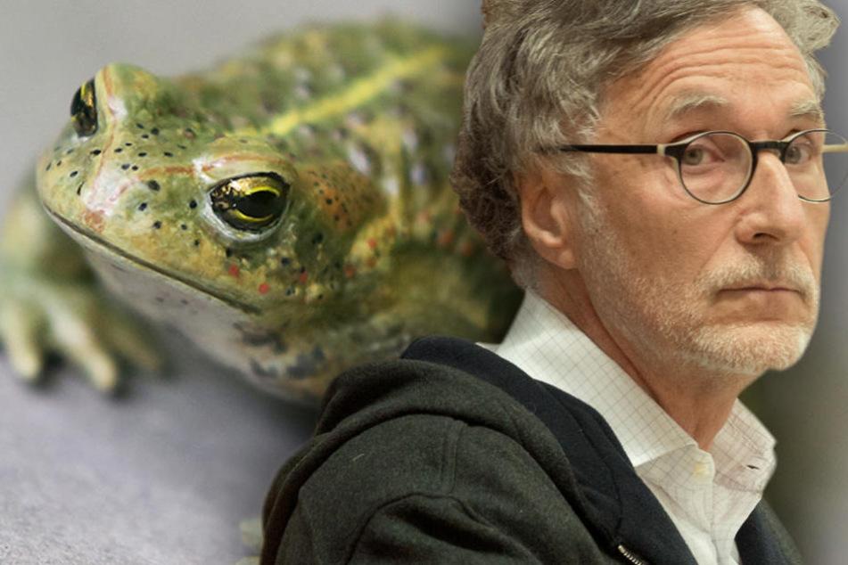 Kleine Kröten, große Wirkung: Kurt Krieger muss warten, bis die Kröten umgezogen sind. (Bildmontage)