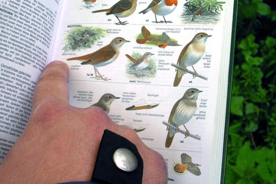 Vor allem Vogelarten könnten ihre Lebensräume verlieren.
