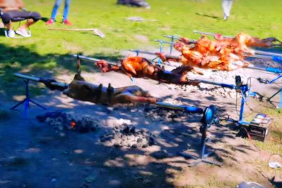 """""""Wir feiern Ostern"""": 12 Schafe in Volkspark Friedrichshain gegrillt"""