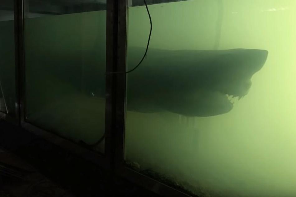 """Der riesige weiße Hai """"Rosie"""" verwest langsam in dem verlassenen Wildtierpark."""