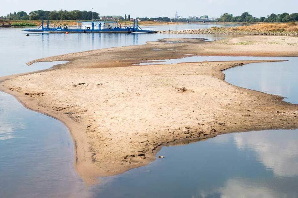 """Trockengefallene Sandbänke sind in der Elbe zu sehen. Im Hintergrund hat die Elbfähre """"Saalhorn Barby"""" festgemacht."""