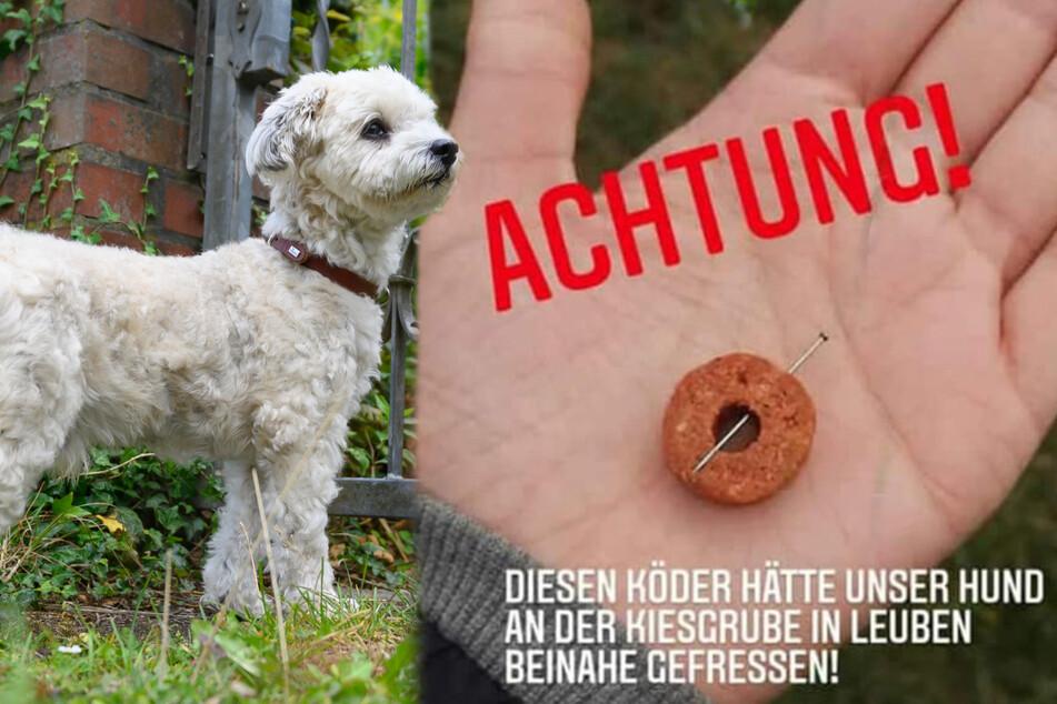Hunde sowie ihre Herrchen beziehungsweise Frauchen müssen zurzeit in der Kiesgrube in Leuben besonders vorsichtig sein. (Bildmontage)