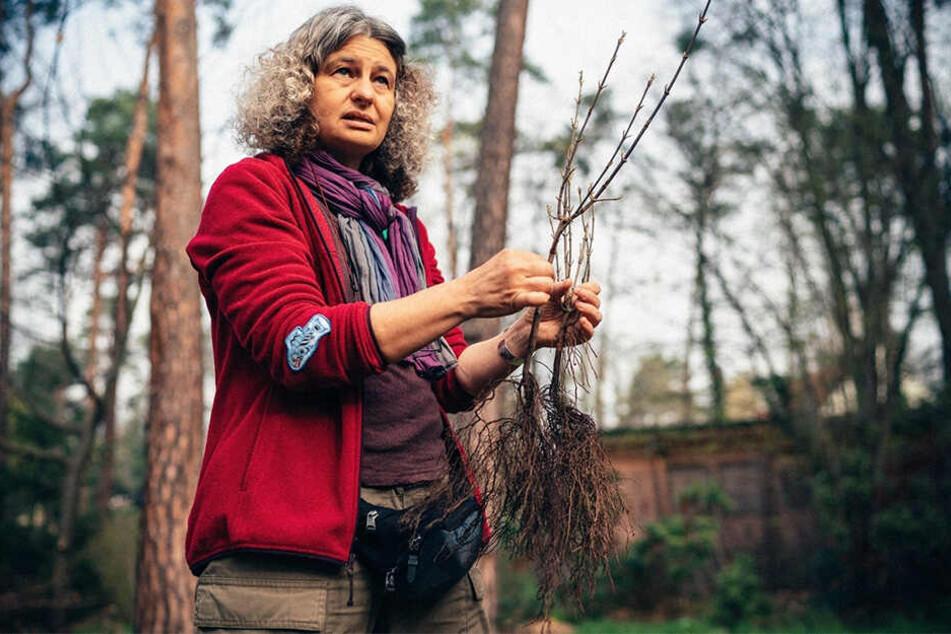 Dresden: Für jeden Dresdner einen Baum: Aktion findet enorm viel Zuspruch