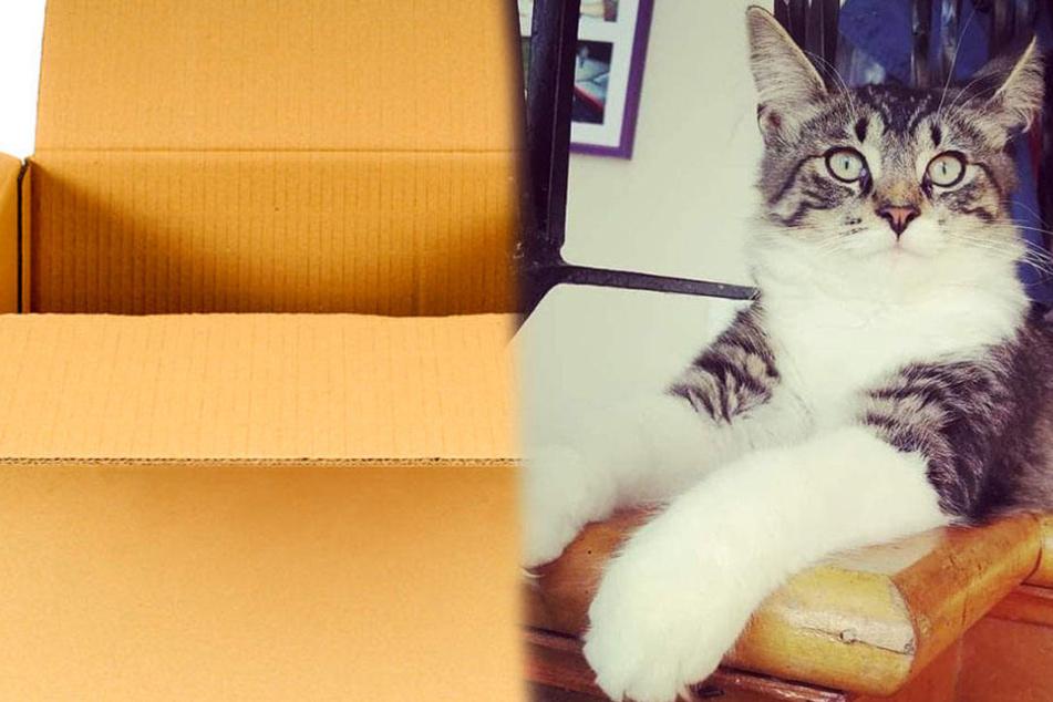 Katze klettert in Paket, dann passiert Unglaubliches