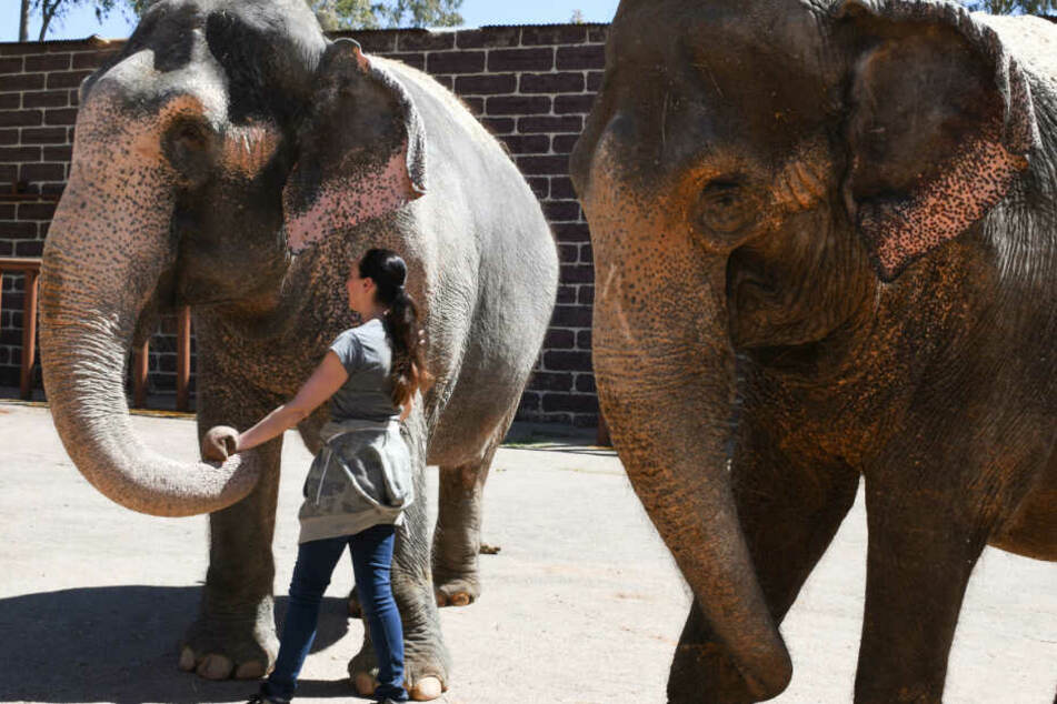 """Im Frühjahr wurden die Elefanten in die Residenz """"El Castillo de la Guardas"""" gebracht. (Archiv)"""