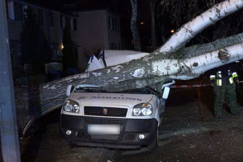 Glücklicherweise wurde niemand durch die umstürzende Bäume verletzt.