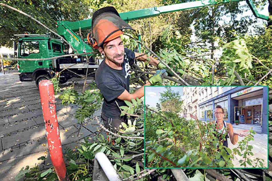 Stadthallenpark: René Oehme (33, F.l.) vom Grünflächenamt schneidet auf der HebebühneTotholz an einer etwa 100 bis 150 Jahre alten Esche ab.