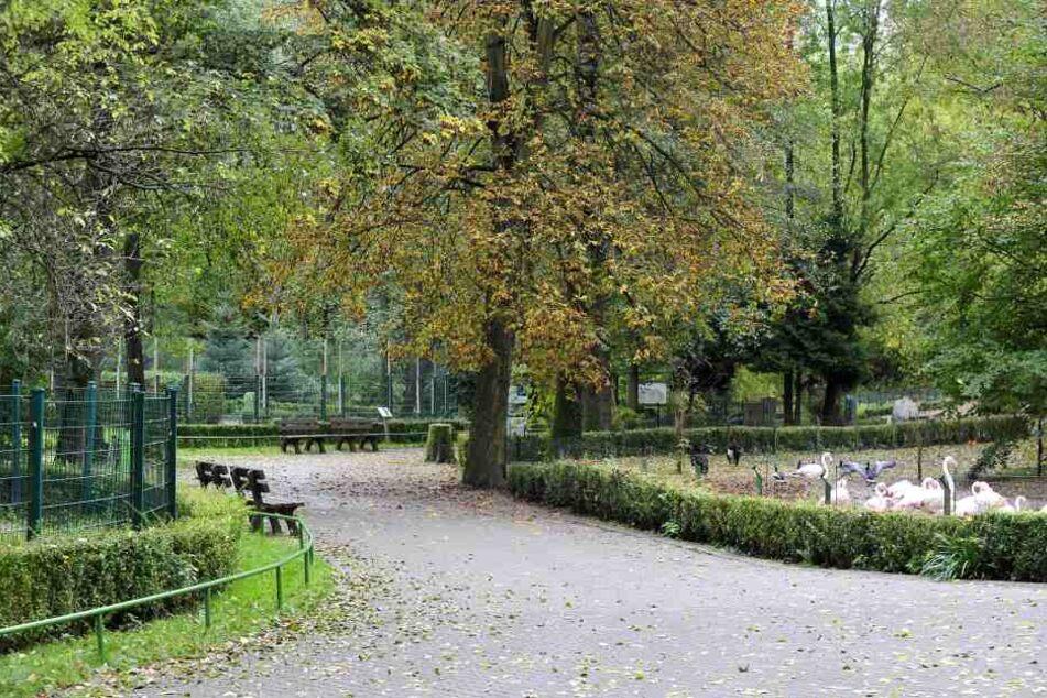 Dem Chemnitzer Tierpark fehlen die Besucher.