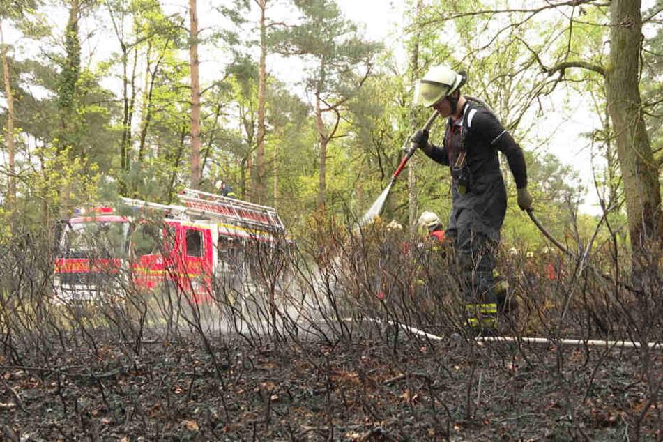 Ein Feuerwehrmann bewässert einen verkohlten Abschnitt in der Fischbeker Heide.