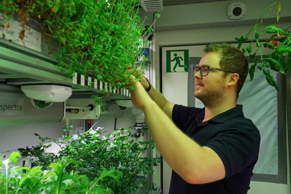 Frisches Gemüse konnte Raumfahrtingenieur Paul Zabel züchten.