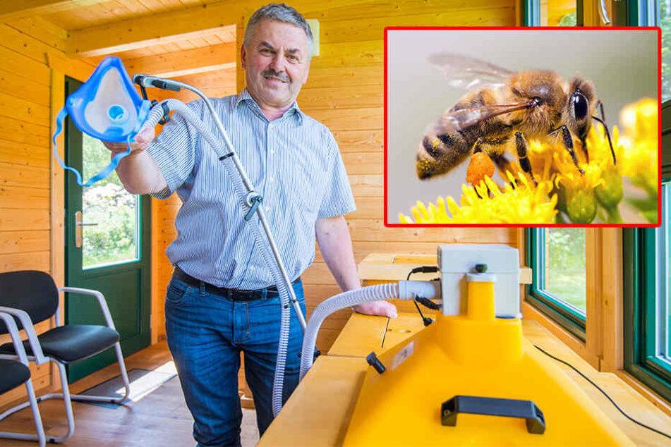 Schlauch, Maske, Heizung, Bienenstock - fertig ist der Inhalator! Jürgen Schmiedgen ist von dessen therapeutischer Wirkung überzeugt. Die Heilkraft kommt von den Bienen (kl.F.).