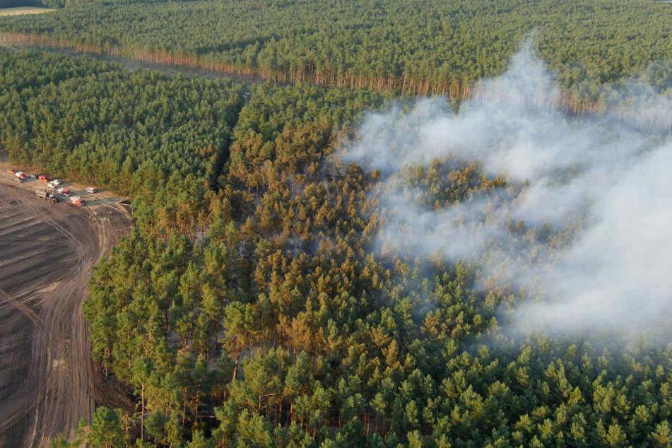 Rauch zieht über ein brennendes Waldgebiet bei Ludwigslust.