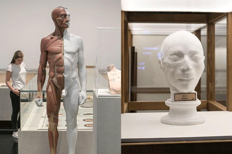 Gegen Rassismus: Sonderausstellung im Hygiene-Museum