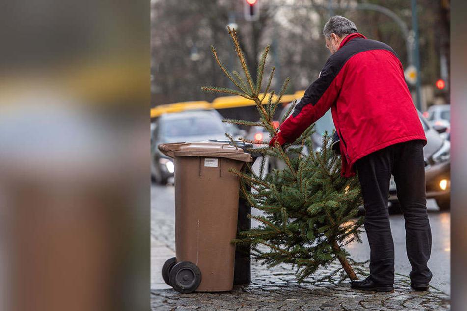 Der ASR sammelt bis 25. Januar ausrangierte Weihnachtsbäume ein.