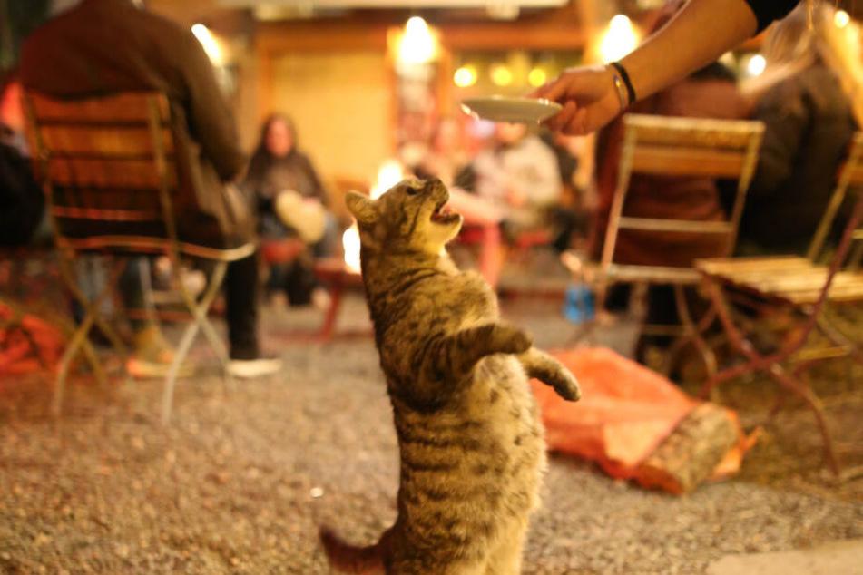 So süüüüüß! Auch in Katy's Garage hat die Miezekatze längst alle Herzen erobert.