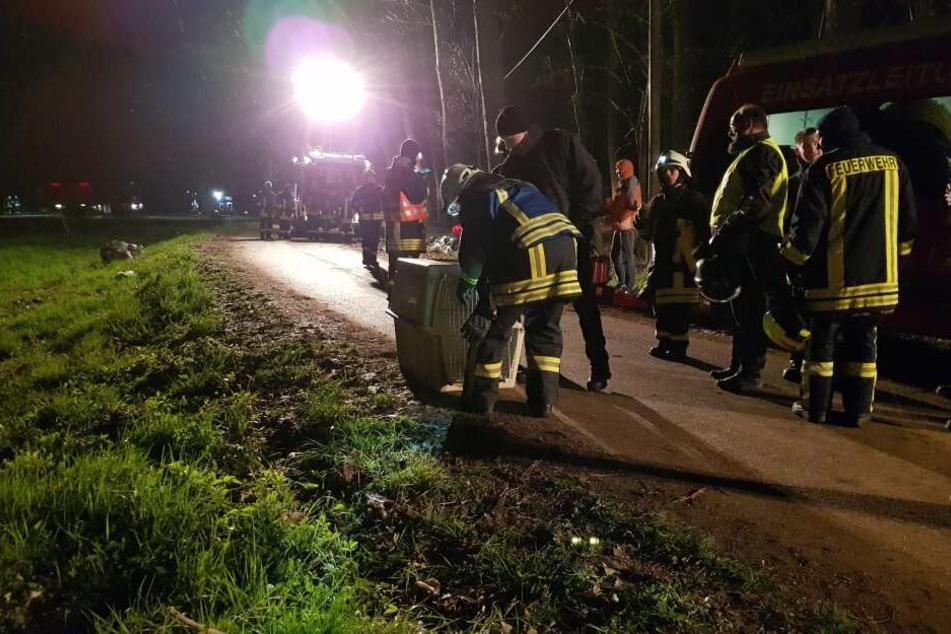 115 Kameraden der Feuerwehr sammelten am Freitagabend zehn tote und zehn schwer erkrankte Kolkraben ein.