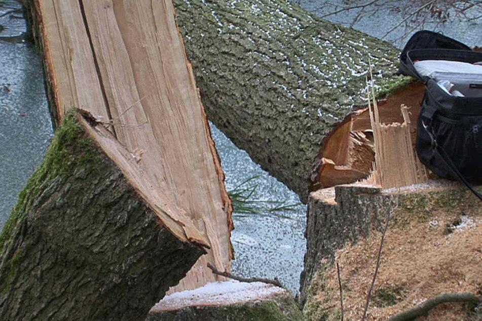 Der Baum war unkontrolliert umgekippt.