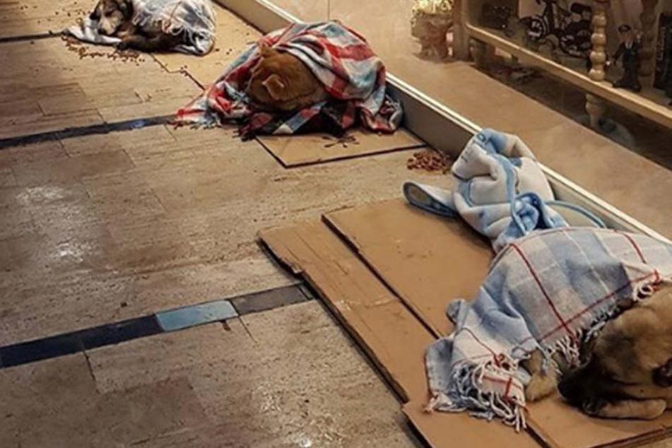 In die warmen Decken eingehüllt, kuscheln sich die Istanbuler Straßenhunde in einer Einkaufspassage zusammen.
