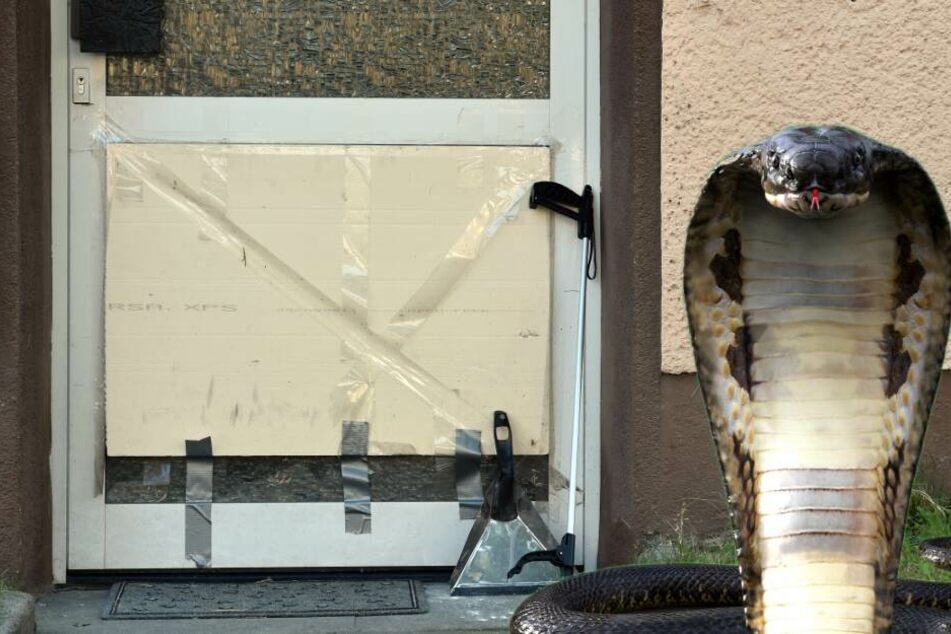 giftige-kobra-entwischt-mehrere-h-user-m-ssen-evakuiert-werden