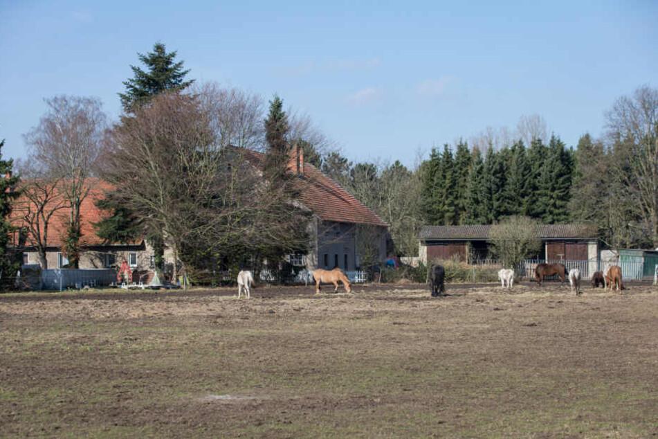Jörg Volker W. (51) züchtete Pferde mit seiner Frau auf einem kleinen Hof in Hille.