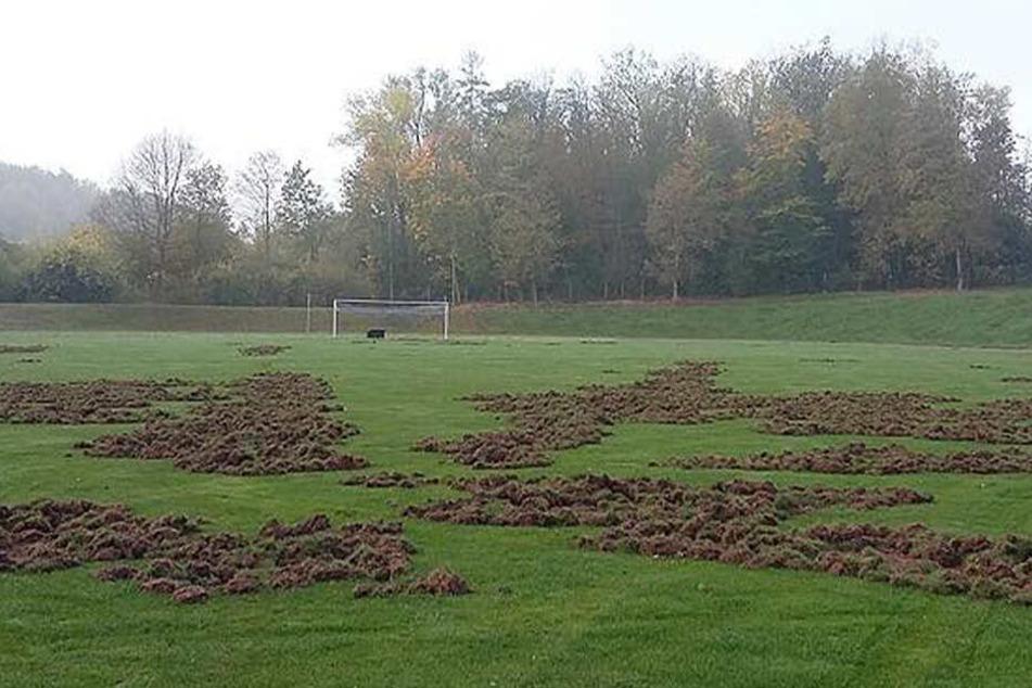 Wildschweine haben zum wiederholten Mal das Stadion in Meerane zerstört.