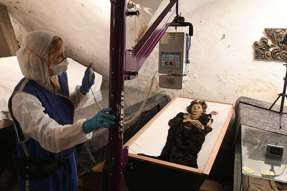 Mit einem mobilen Röntgen-Gerät durchleuchtet Forscherin Amelie Alterauge (29) die Mumien in der Gruft der Klosterkirche Riesa.