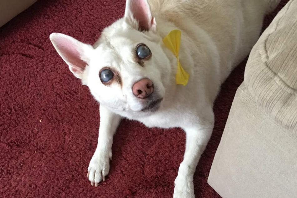 Feuerwerk hat Hund blind gemacht: Besitzerin fassungslos