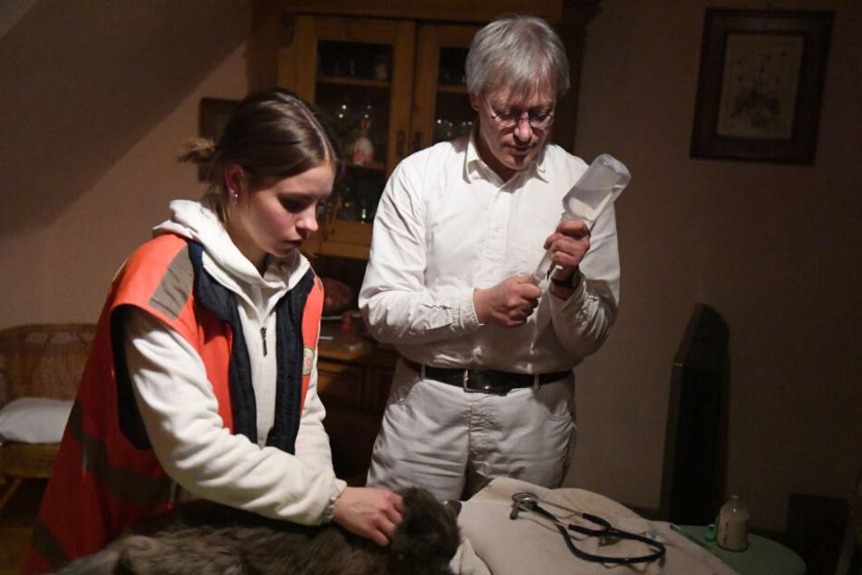 Der Tierarzt Gabor Horvath und die Studentin der Tiermedizin, Malin Schmidt, behandeln während einer Schicht der Tierrettung München e.V. eine Katze auf einem Bügelbrett.