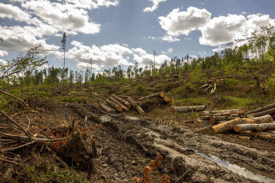 Weltnaturschutz-Union: Pandemie hat Naturschutz schwer getroffen