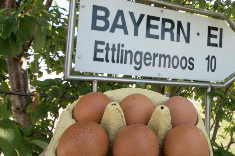 Bayern-Ei Skandal: Mann muss sich für einen Toten vor Gericht verantworten