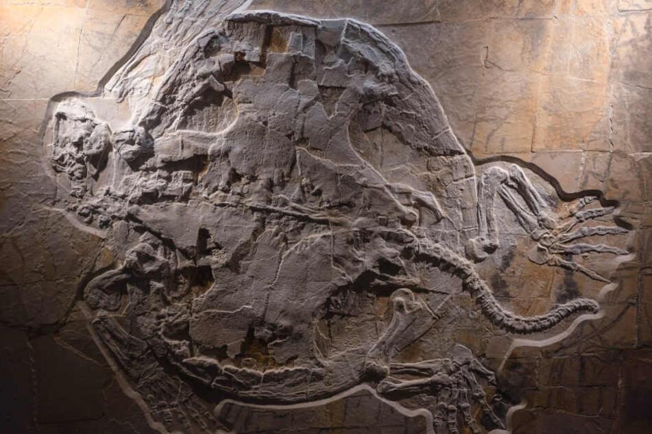 """Weltweit größte Jura-Schildkröte: """"Mobbl"""" ist 150 Millionen Jahre alt"""