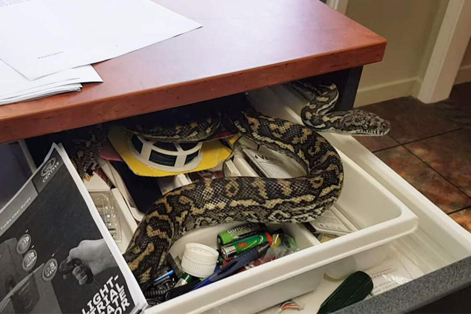 Der Inhalt der Schublade lehrte eine Büroangestellte das Fürchten.