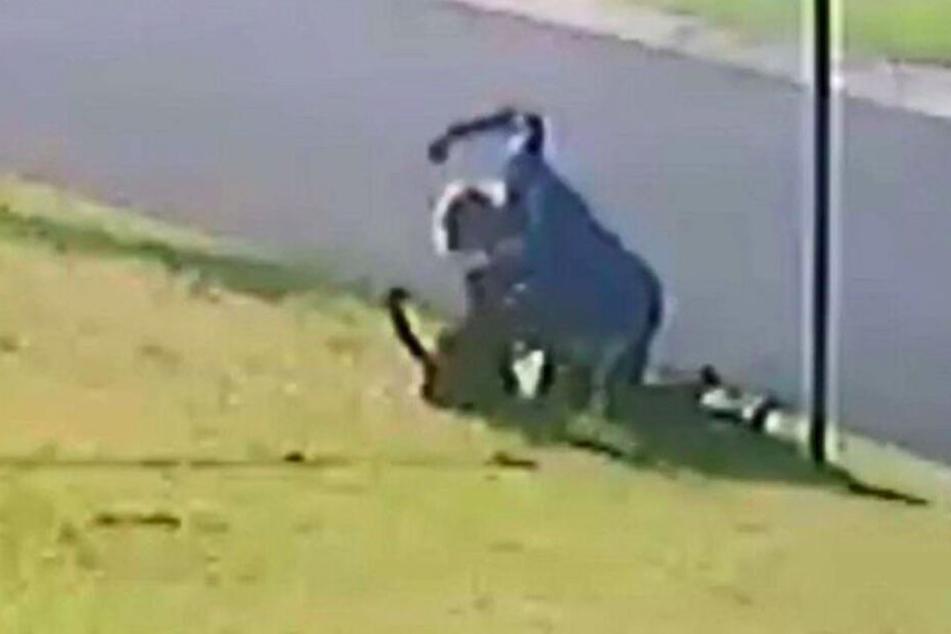 Bilder der Überwachungskamera zeigen den brutalen Angriff.