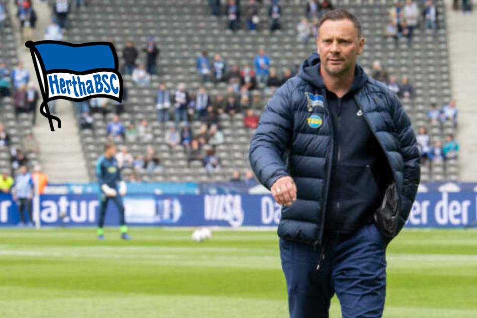 Comeback perfekt: Pal Dardai übernimmt Hertha BSC erneut