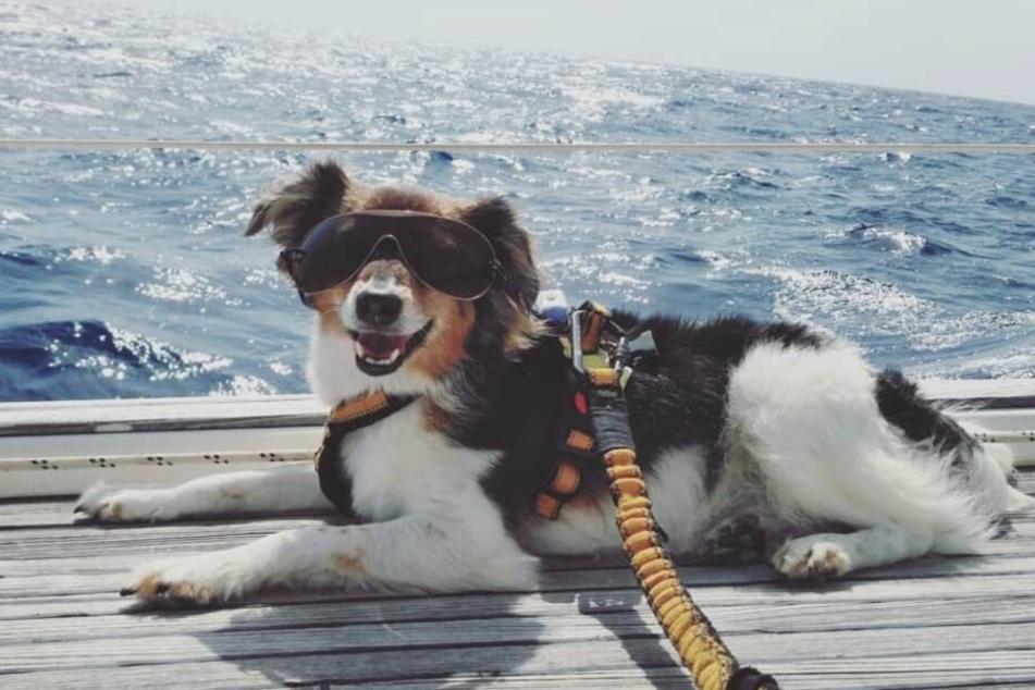 Dieser Hund war eine arme Sau, jetzt ist er ein Star