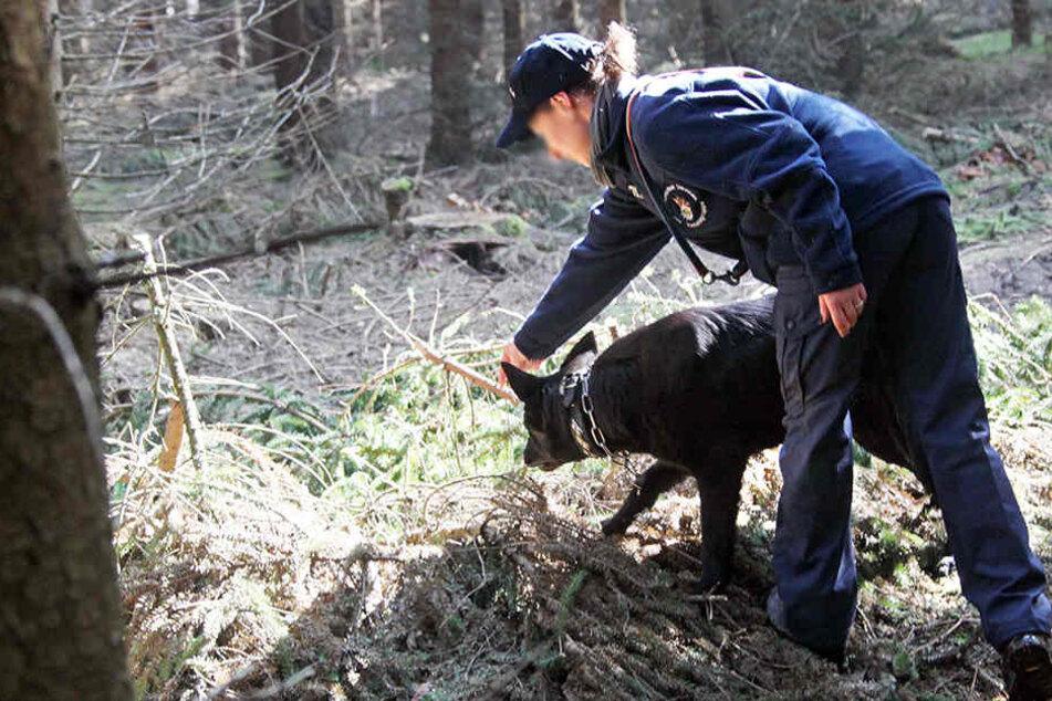 Ein Spürhund sucht in einem Wald nach Vermissten. (Archivbild)