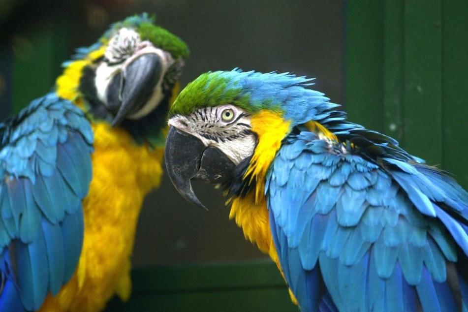 Besonders empfindliche Vogelarten wie etwa Papageien müssen in die Innenräume umziehen.