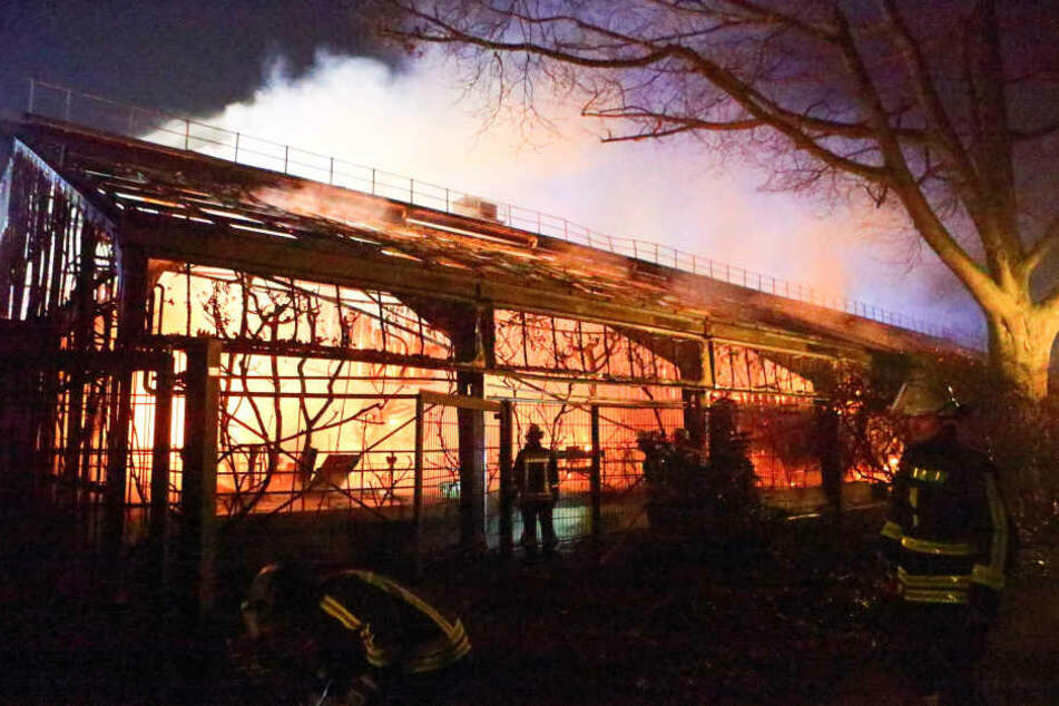 1.1.2020: Feuerwehrleute stehen nach Löscharbeiten vor dem Affenhaus im Krefelder Zoo.
