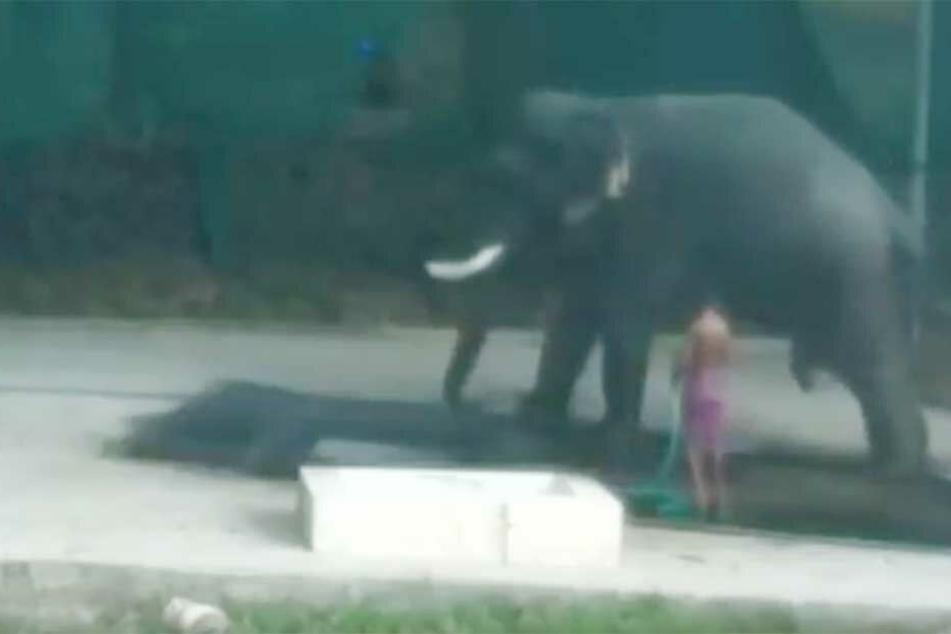 Tödlicher Fehler: Mann prügelt Elefant, der setzt sich auf ihn