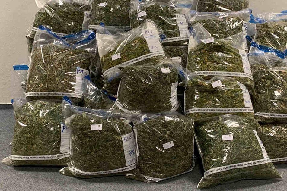 Drogen im Wert von 210.000 Euro entdeckt: Polizei hebt Hanfplantagen aus