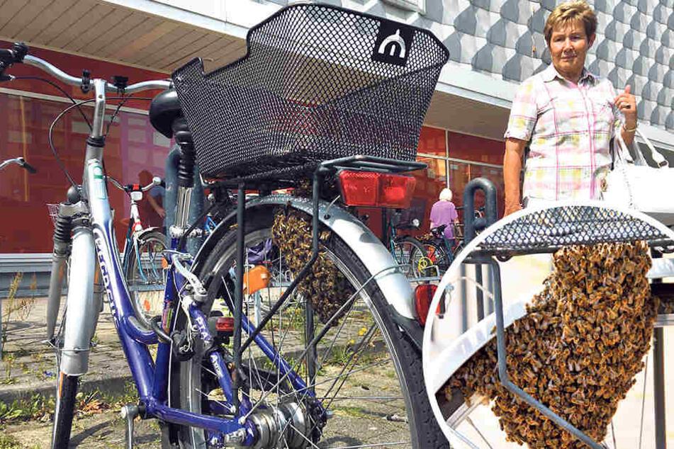 Hilfe! Ein Bienenvolk hat mein Fahrrad besetzt