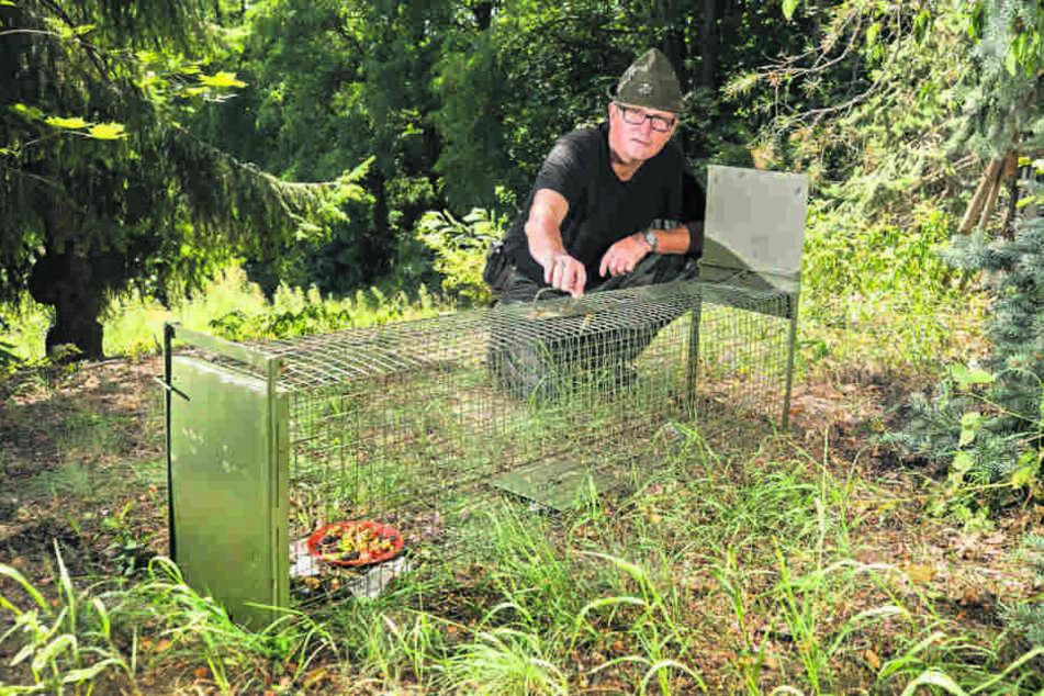 Warnt vor der Waschbären-Invasion: Jagdpächter und  Stadtjäger Hartmuth Geschke (56).