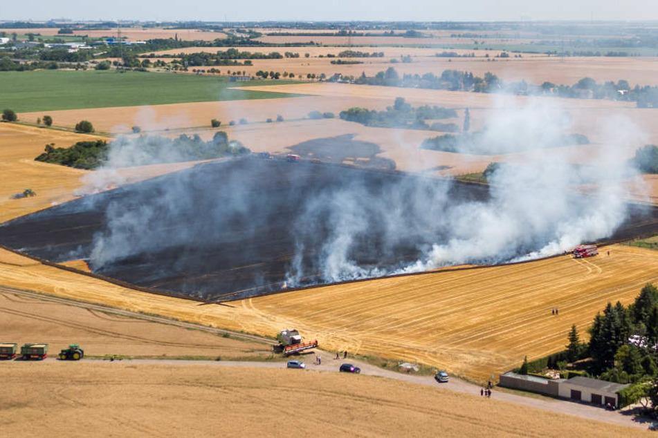 Das abgeerntete Feld im Osten von Halle (Saale) brannte am Freitagnachmittag. Dadurch kam es auf der angrenzenden A14 zu Sichtbehinderungen.