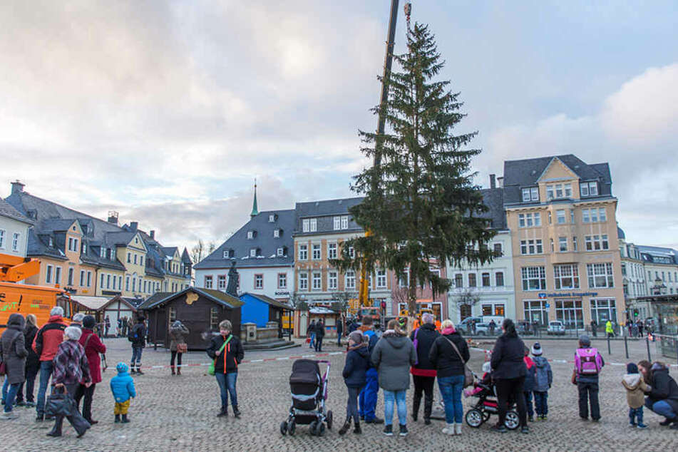 Der Annaberger Weihnachtsbaum steht!